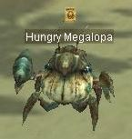 Hungry Megalopa